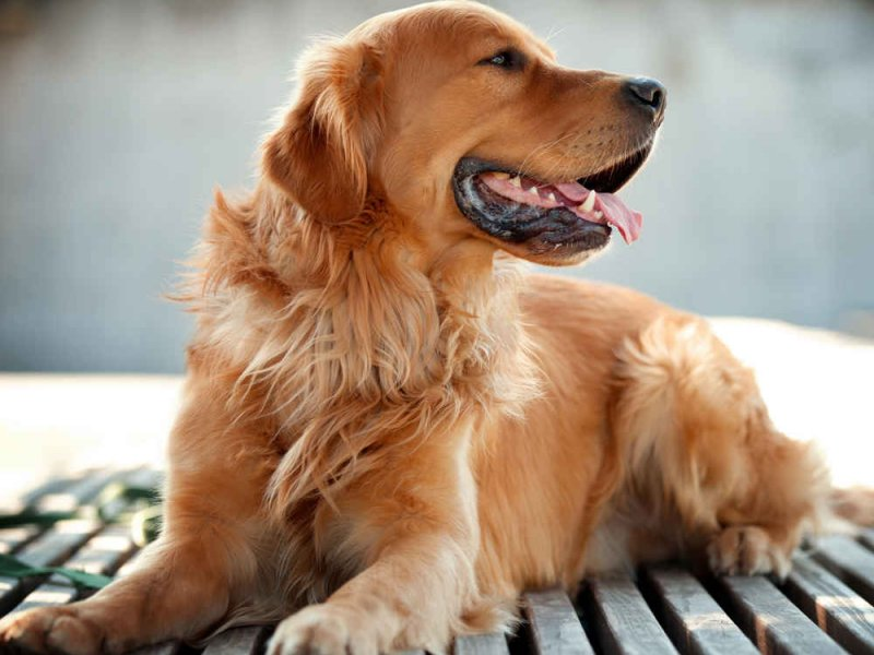 Диабетикам советуют завести собаку