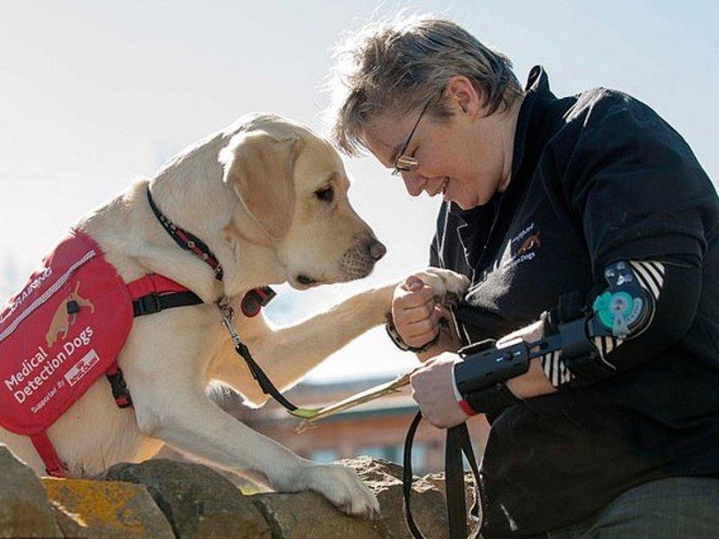 Собаки спасают диабетиков от смертельно опасной гипогликемии
