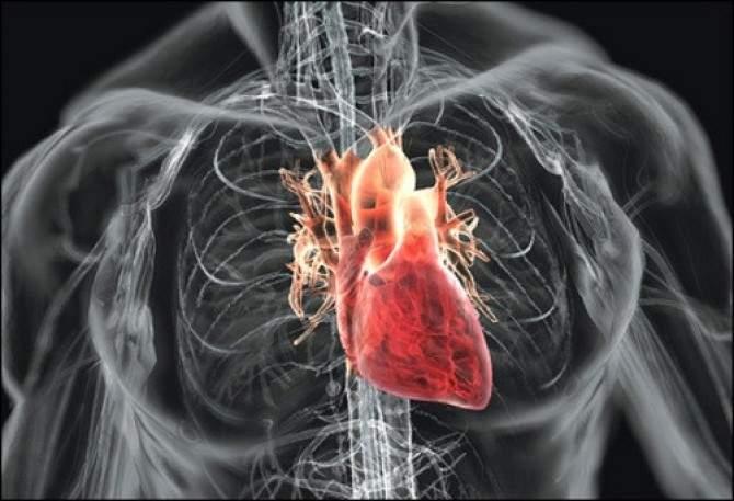 Рецепты для укрепления сердца и сосудов
