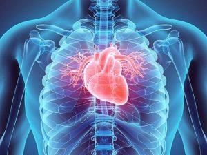 Лекарство от инфаркта частично восстановит больное сердце