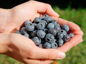 Ежедневное употребление 150 грамм черники существенно улучшает состояние сердца и сосудов