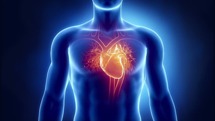 Остановка сердца — симптомы и методы оказания помощи