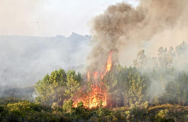 Эксперт рассказал, как дым от пожаров влияет на рак и болезни сердца