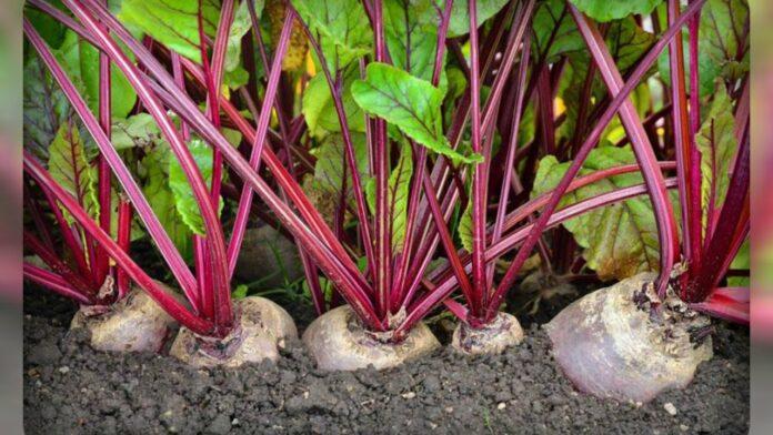 Этот диетический овощ поможет снизить кровяное давление