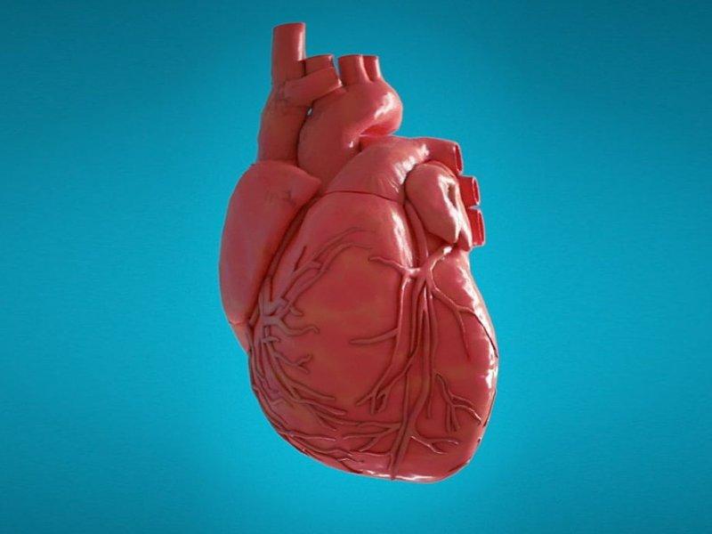 Эксперты рассказали, что помогает и вредит сердцу