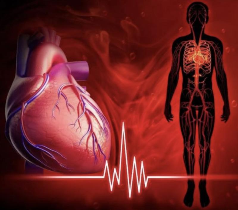8 фактов о здоровье сердца, которые надо знать всем, кто хочет дожить до 100 лет