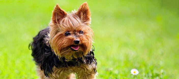 Как нужно правильно ухаживать за собакой?