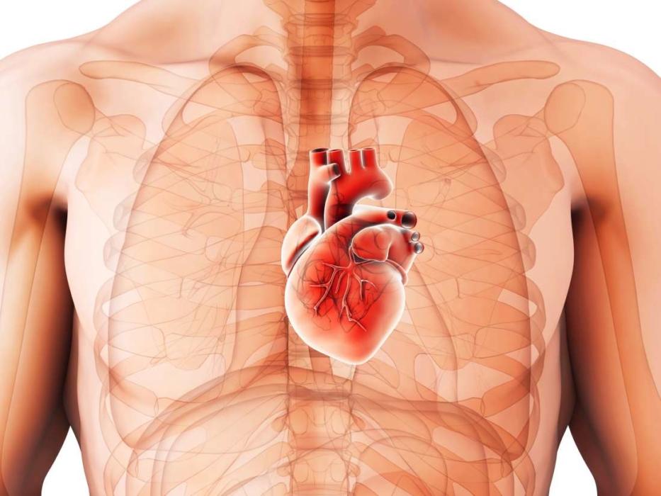 Кардиомегалия (увеличенное сердце)