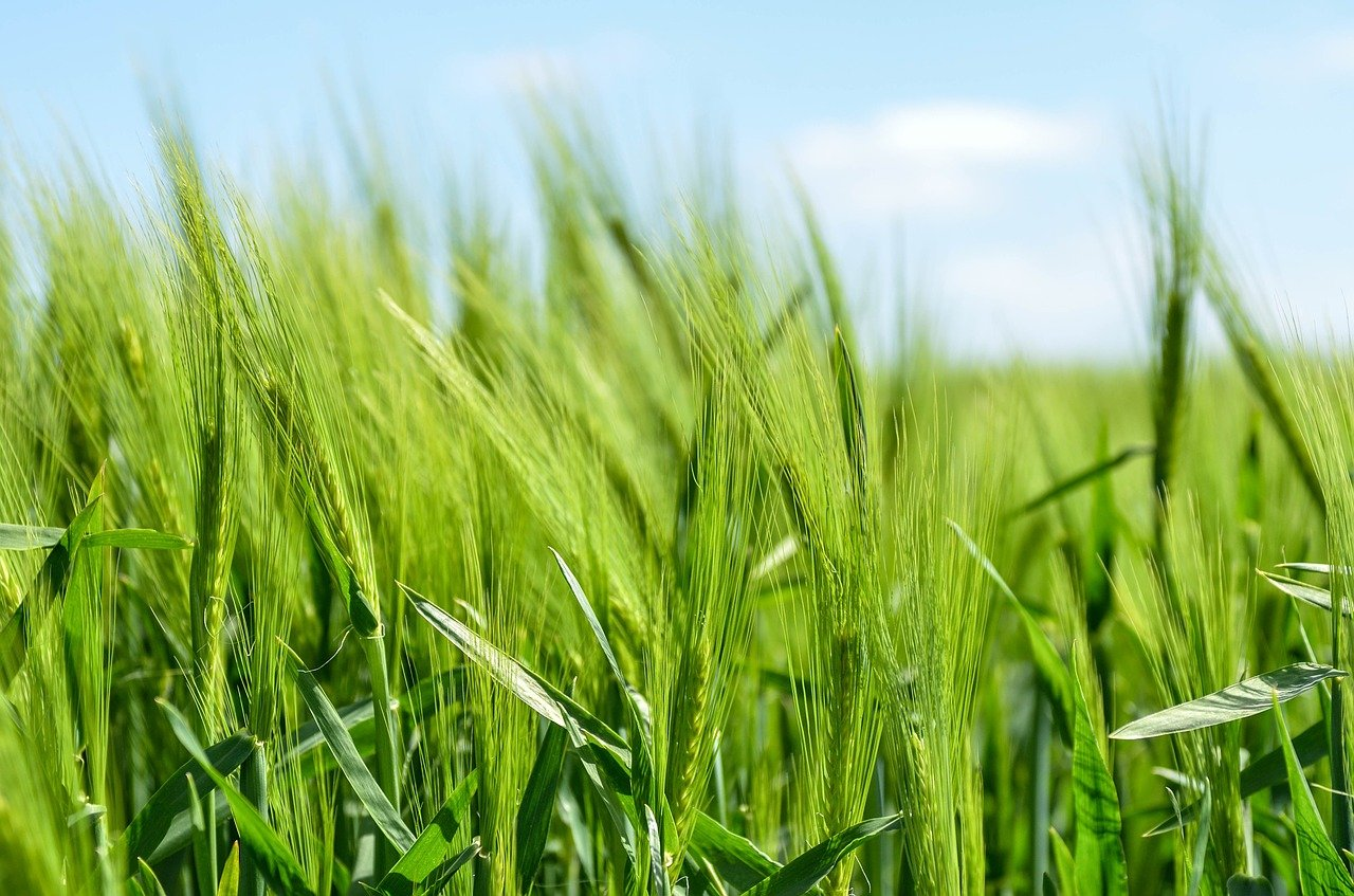 Башкирия планирует увеличить площадь орошаемых полей