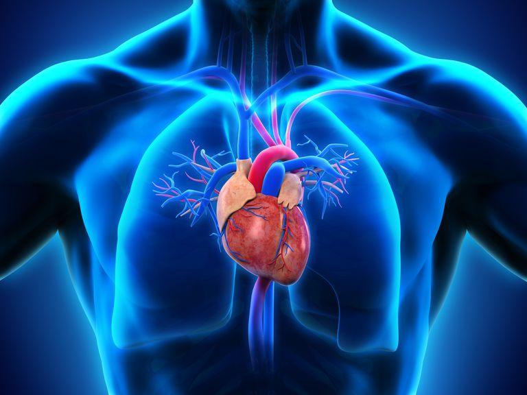 Факты о болезнях сердца, которые вы не слышали